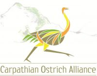 Carpathian Ostrich Alliance